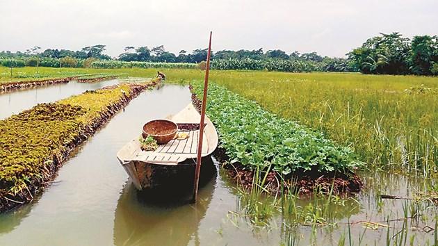 Според учените плаващите градини могат не само да помогнат за намаляване на несигурността на храните, но и да осигурят доход за селските домакинства в районите на Бангладеш, застрашени от наводнения