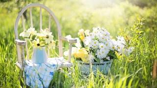 Как да спасим цветята в жегите
