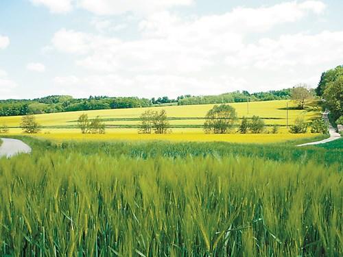 Зеленото торене повишава плодородието на почвата