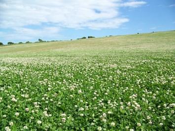 С подходяща тревна смес ще разнообразите сеитбооборота