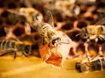 Пчеларите ще бъдат компенсирани с 600 хил. лв. за щети от растителна защита