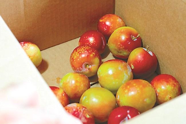 При недостиг на калций ябълката страда от горчиви ядки. Болестта се проявява по време на съхранението на плодовете.