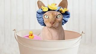 Внимавайте с къпането! Може да вреди