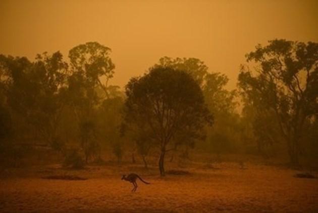 Надежда за Австралия: 5-дневен дъжд очакват синоптиците