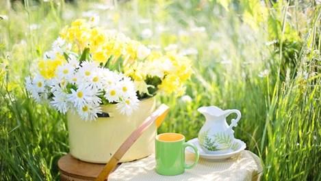 Защо зеленият чай не е само за пиене