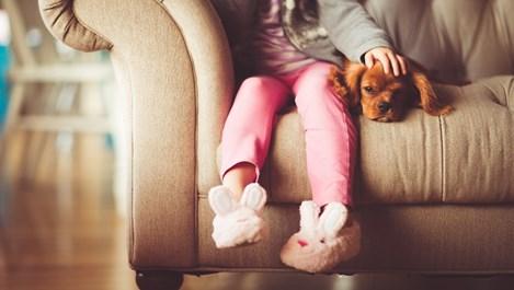 Важни правила при избора на домашен любимец