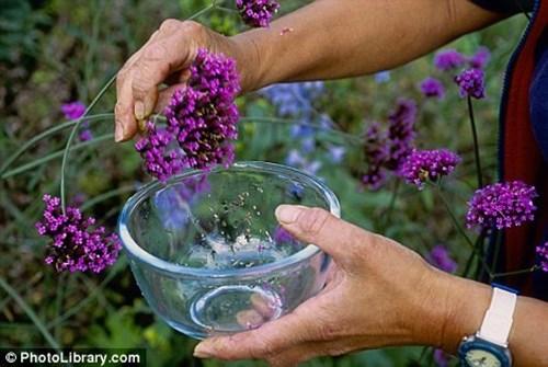 Набавете си семена от собствената градина