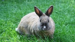 Зайчетата са идеалният домашен любимец