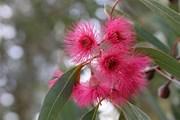 5 растения с ароматни листа