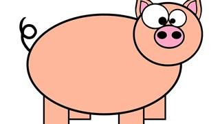 Какво предвещава Годината на Земното прасе