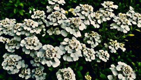 Нетрадиционни цветя. Защо не?