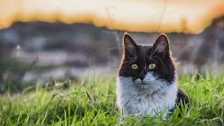 Какво означава, когато котките се взират в нищото