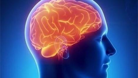 По-голям мозък = по-висока интелигентност. Дали?