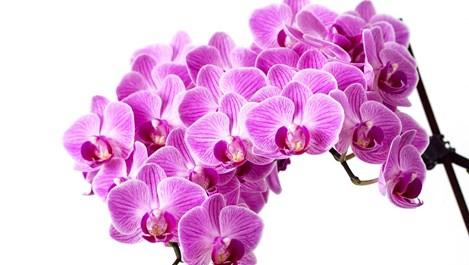 Лесни за отглеждане орхидеи