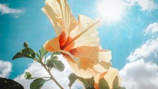 Слънце във Везни - прекрасен период за нов старт