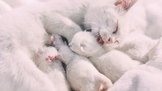 Как да храним бременната котка