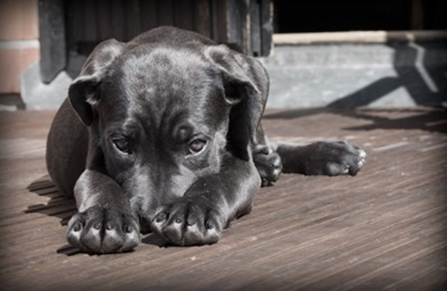 17 кученца изхвърлени на студа