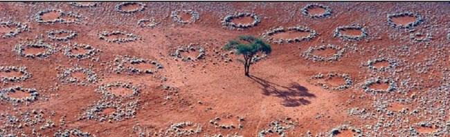 Мистерио кръгове са на площ от няколко хиляди километра в тревистизнитете степи на Намибия. Те са от 2 д о 15 м в д иаметър и в тях не расте нищо. Не е ясно защо средпасищата изневи- делица се появяват оголени кръгове земя, съществуват няколко години и изчезват. Проучване е установило, че следсухи години кръговете се увеличават и нарастват, а следдъждовни се свиват и изчезват.