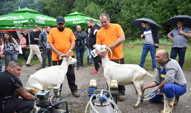 Пенка с лекота победи конкуренцията / Снимки: Национален събор на овцевъдите в България