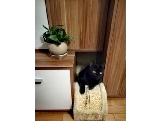 Със скандали няма да отучите котката да си точи ноктите на дивана