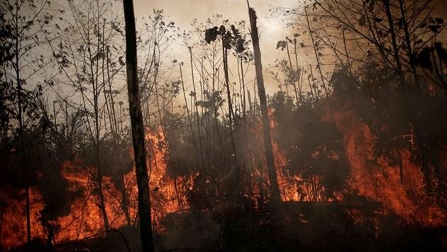 Стотици нови пожари пламнаха в Бразилия (Снимки)