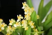 Ароматизирайте дома с живи цветя