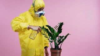 Стайни растения, които не изискват специални грижи