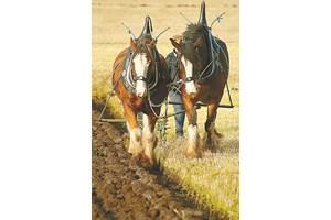 Не претоварвайте коня с работа