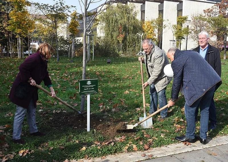 Засаждане на дърво в памет на донорите в понеделник, 11 ноември