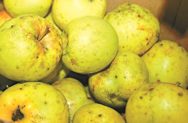 Плодовете се нападат от болести и вредители и не се съхраняват продължително, когато на дръвчетата им липсва калций