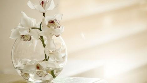 Рецепти срещу неприятелите на орхидеите