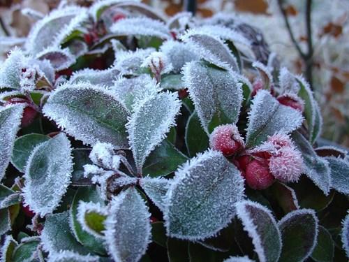 9 задачки в градината през декември