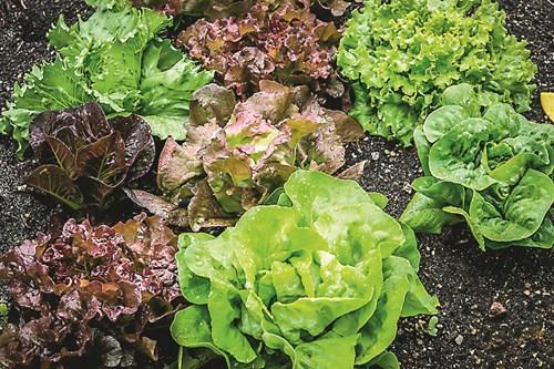 Какво предстои в зеленчуковата градина през август