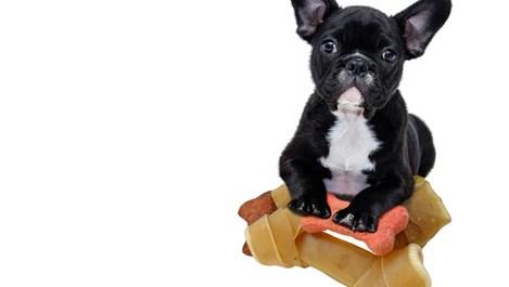 Какво да правим, ако кучето ни е с наднормено тегло
