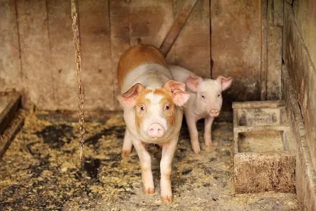 Албански фермери се оплакват от българското месо