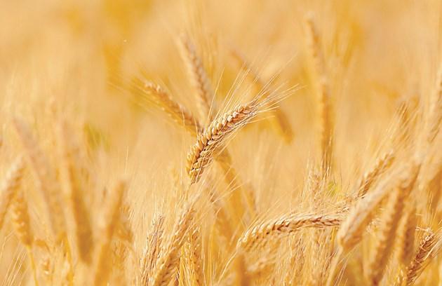 Изследователите сравняват как селскостопанската производителност се влияе от слънчевото геоинженерство и намаляването на емисиите
