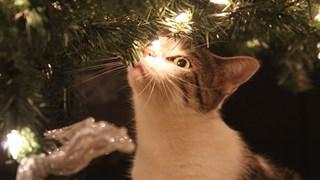 Котки реагират на коледна украса (Видео)