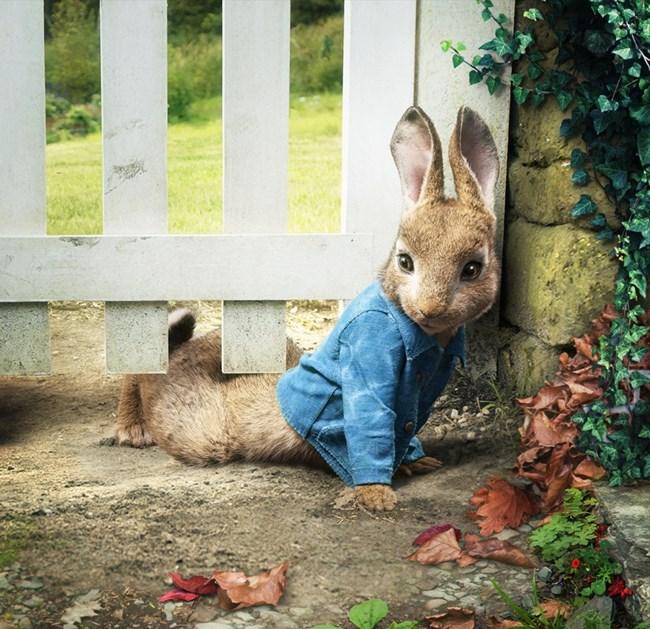 Приключенията на зайчето Питър са най-очакваната анимация.