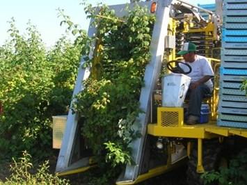 14 американски комбайна прибират малини в България