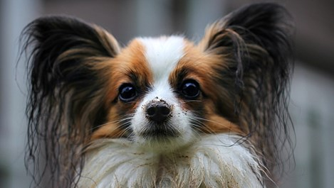 Трябва ли му прическа на кучето?
