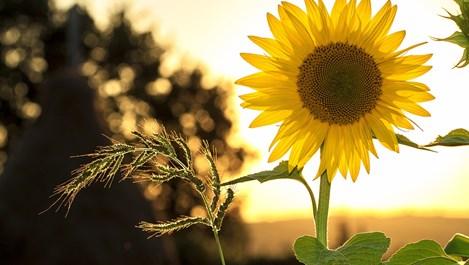 Слънце в Рак - повече вдъхновение и уют