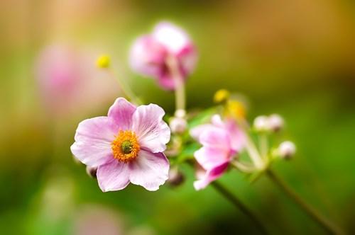 За красива есен с малко по-нетрадиционни цветя