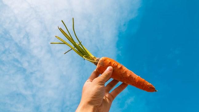 Консумирането на моркови през бременността има множество ползи