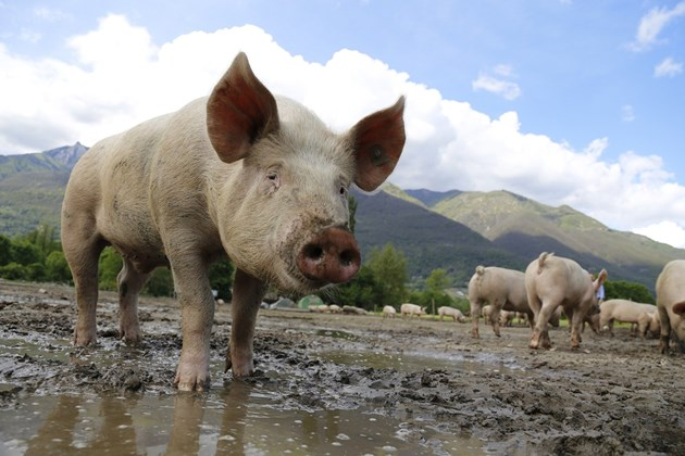Български евродепутат: Цената на месото ще скочи драстично, ако се приемат ограниченията за фуражите