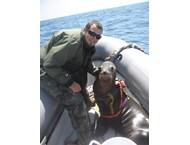 Американският колеж в София дава първата жертва в студената война с делфини