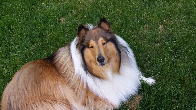 Най-подходящите породи кучета за семейства с малко дете