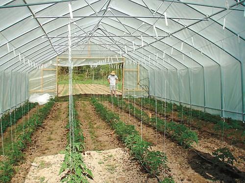 Пет от най-важните неприятели които вредят по растенията в парници и оранжерии