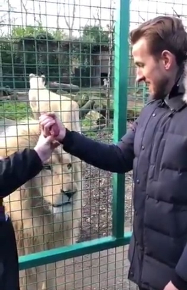 Хари Кейн погали лъв
