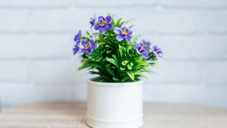 Какво означават символите върху етикетите на цветята