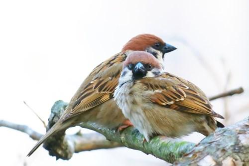 За да поканите птици в двора